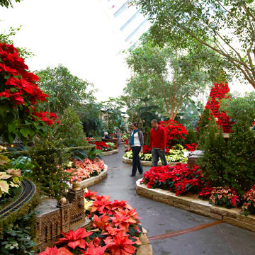 Omaha: Poinsettia Show at Lauritzen Gardens