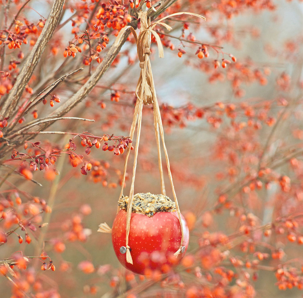 Appealing apple cup