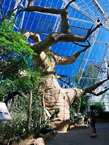 Ohio: Cleveland Botanical Garden