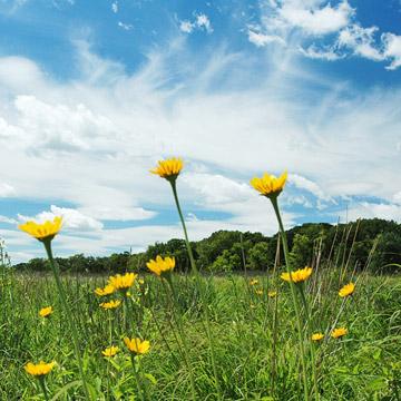 Minnesota: Cowling Arboretum