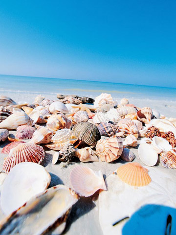 Sanibel and Captiva, Florida: A Shell of a Time
