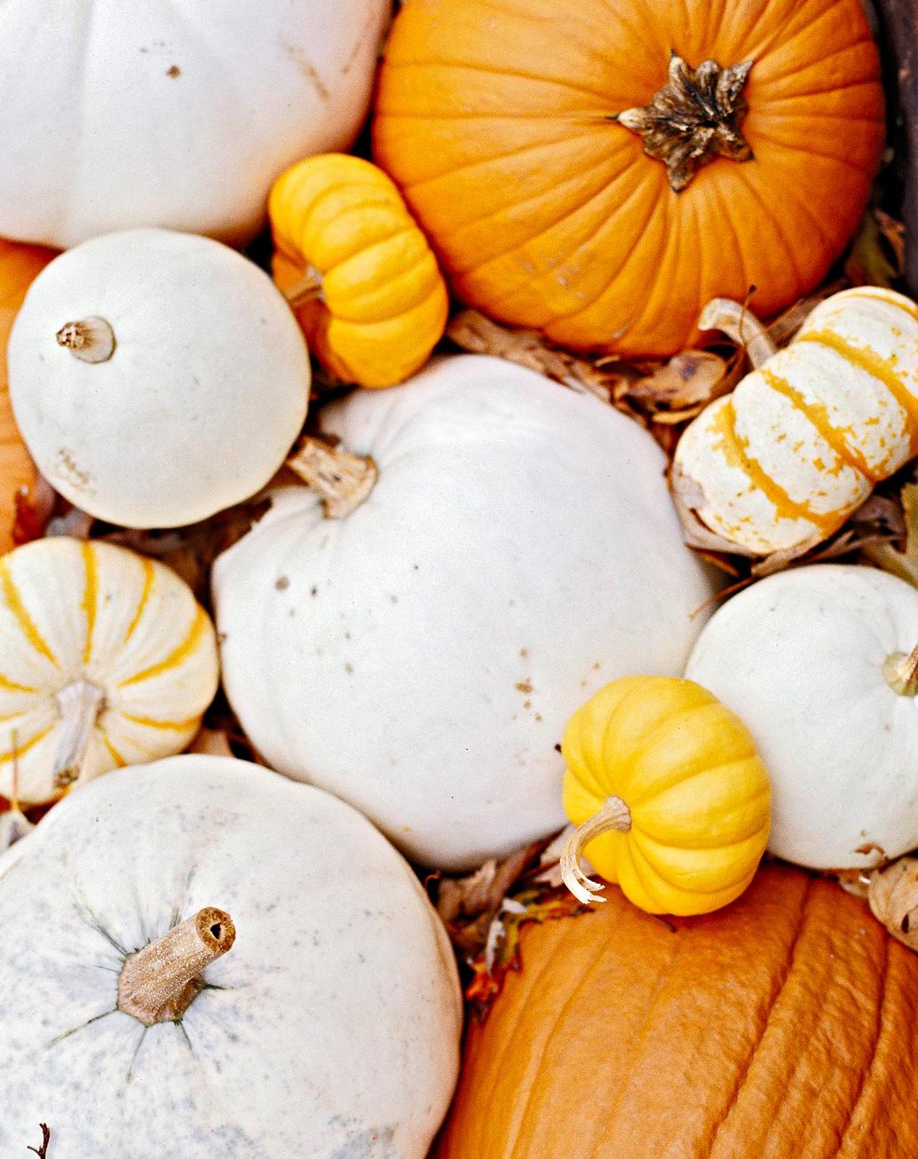Pumpkin picks