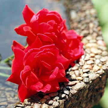 Bouquet caveat