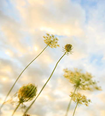 Visit native seed gardens