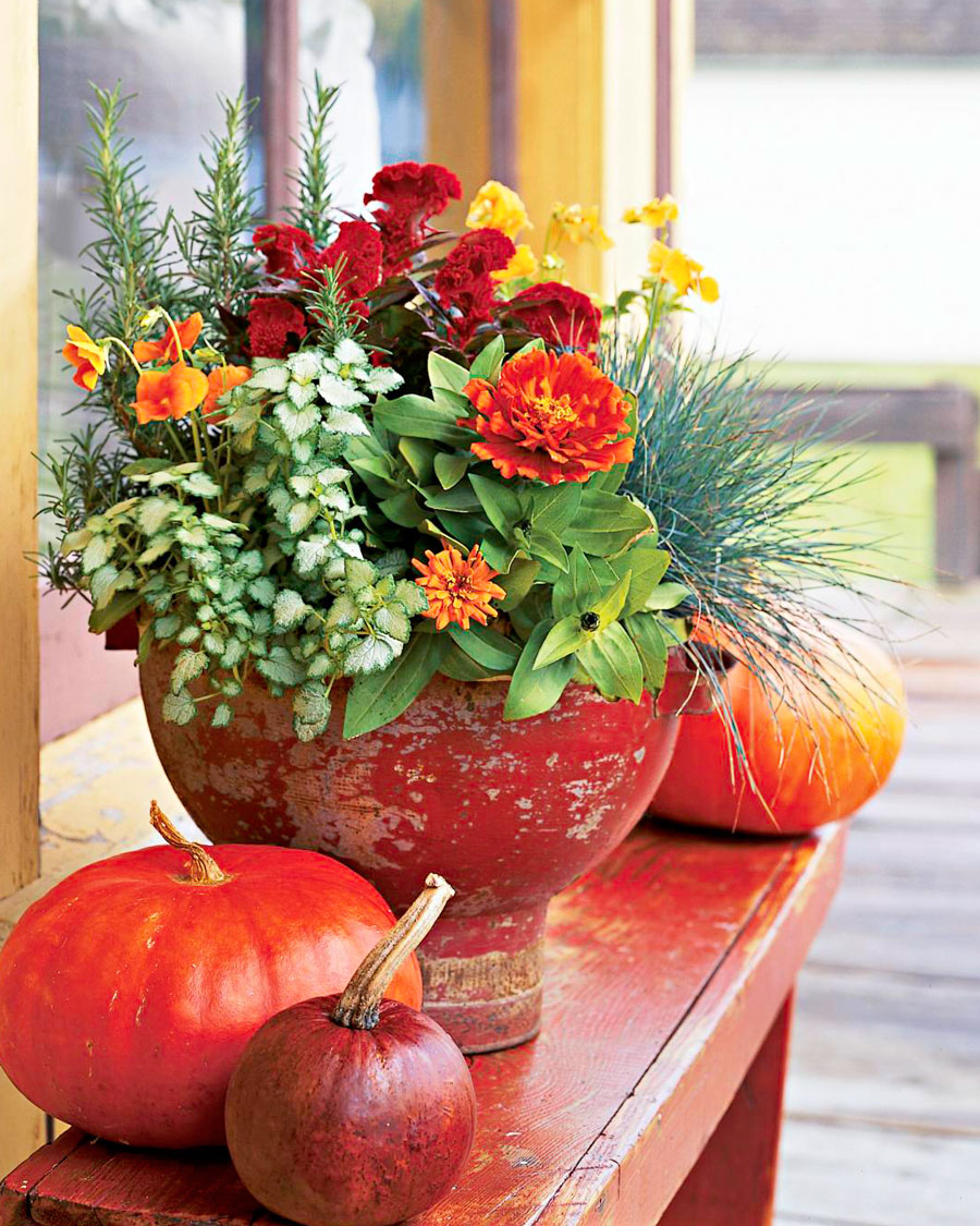 Cream of the crop fall container garden