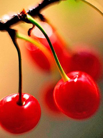 Cherry pie tips