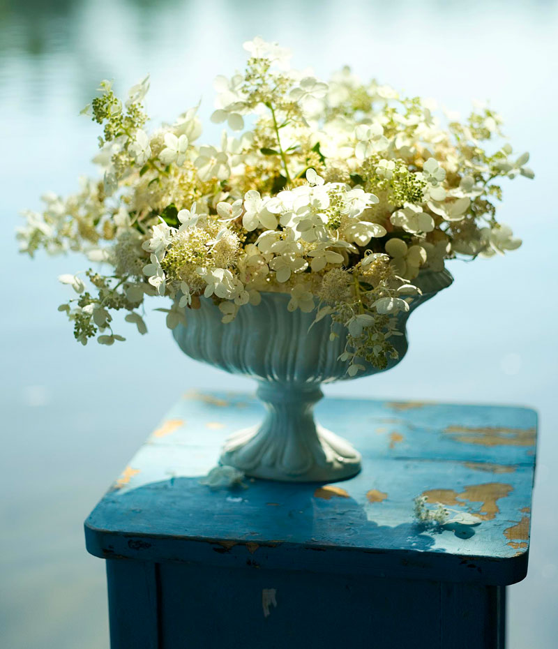 Panicle hydrangeas: What you need to know