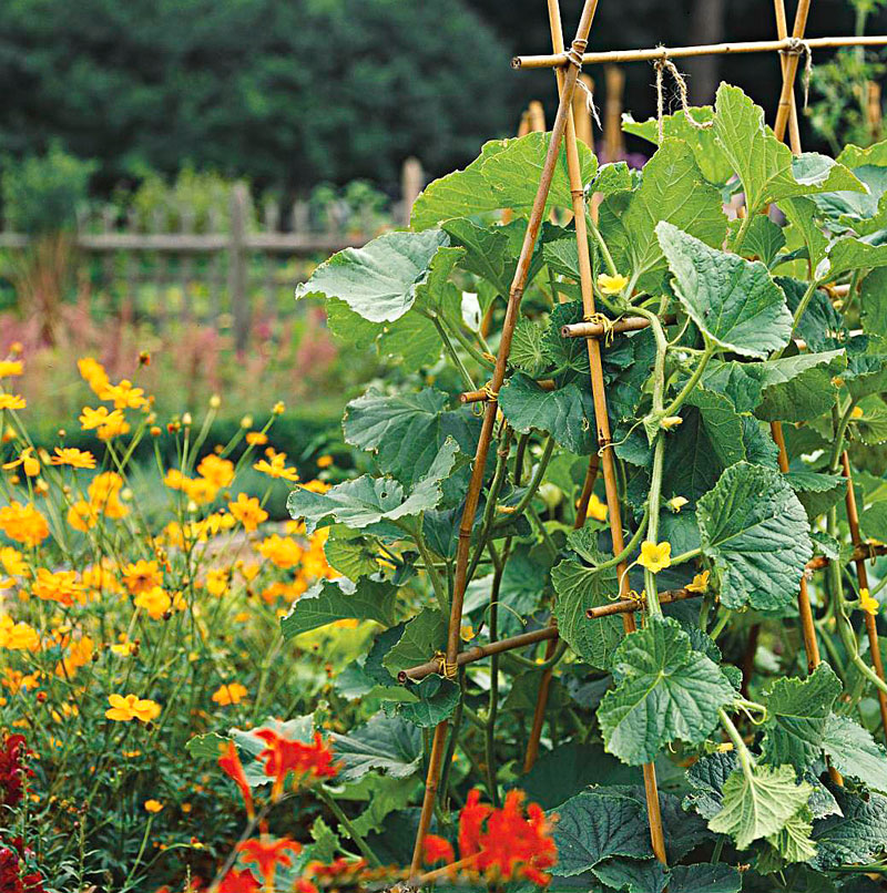 Integrate vegetables with other plants