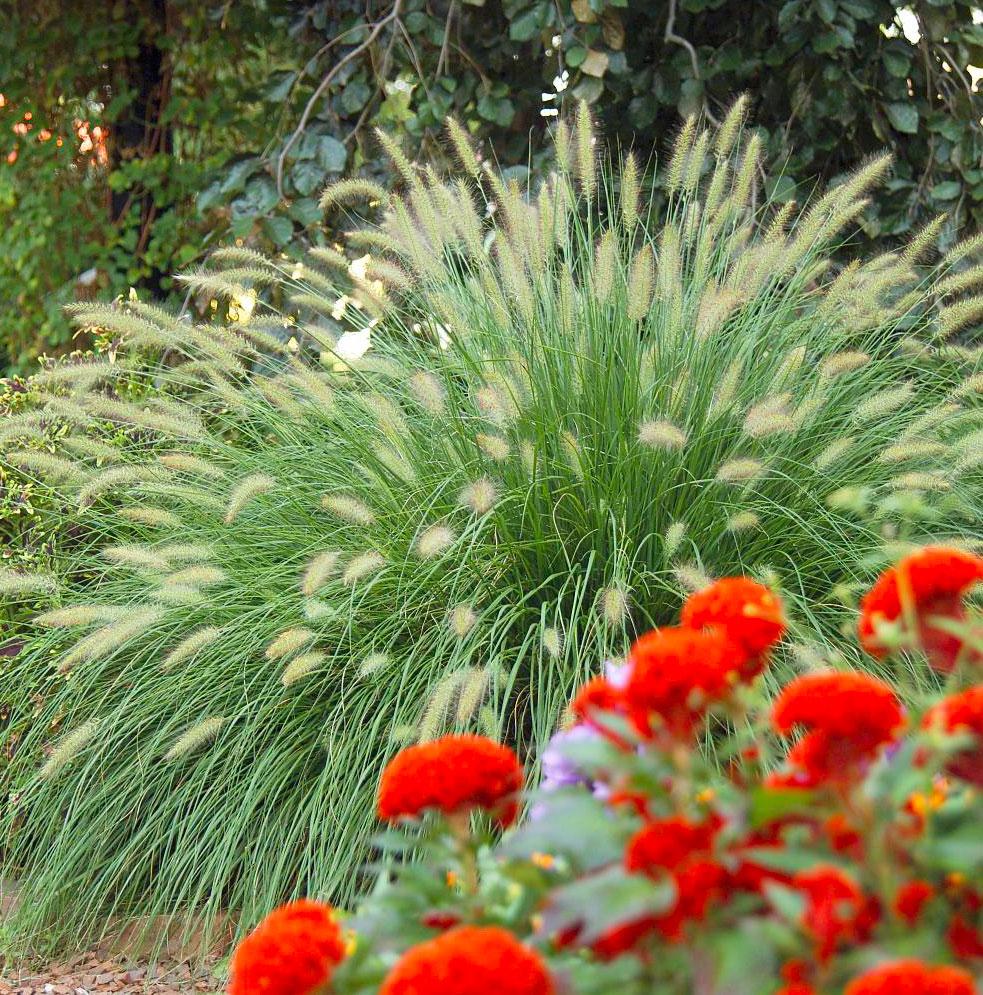 Versatile grasses