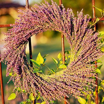 Midwest lavender farms