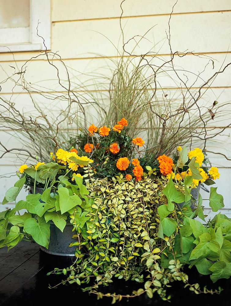 Informal summer planting