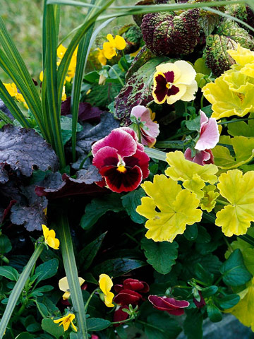 Flower garden tasks for the northern Midwest (Zones 4 to 5)