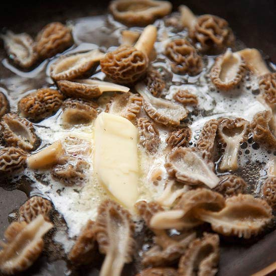 Fresh-picked morels