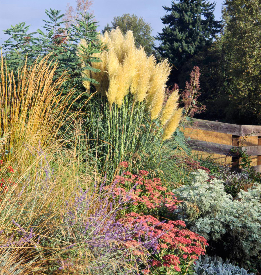 Add beauty with ornamental grasses