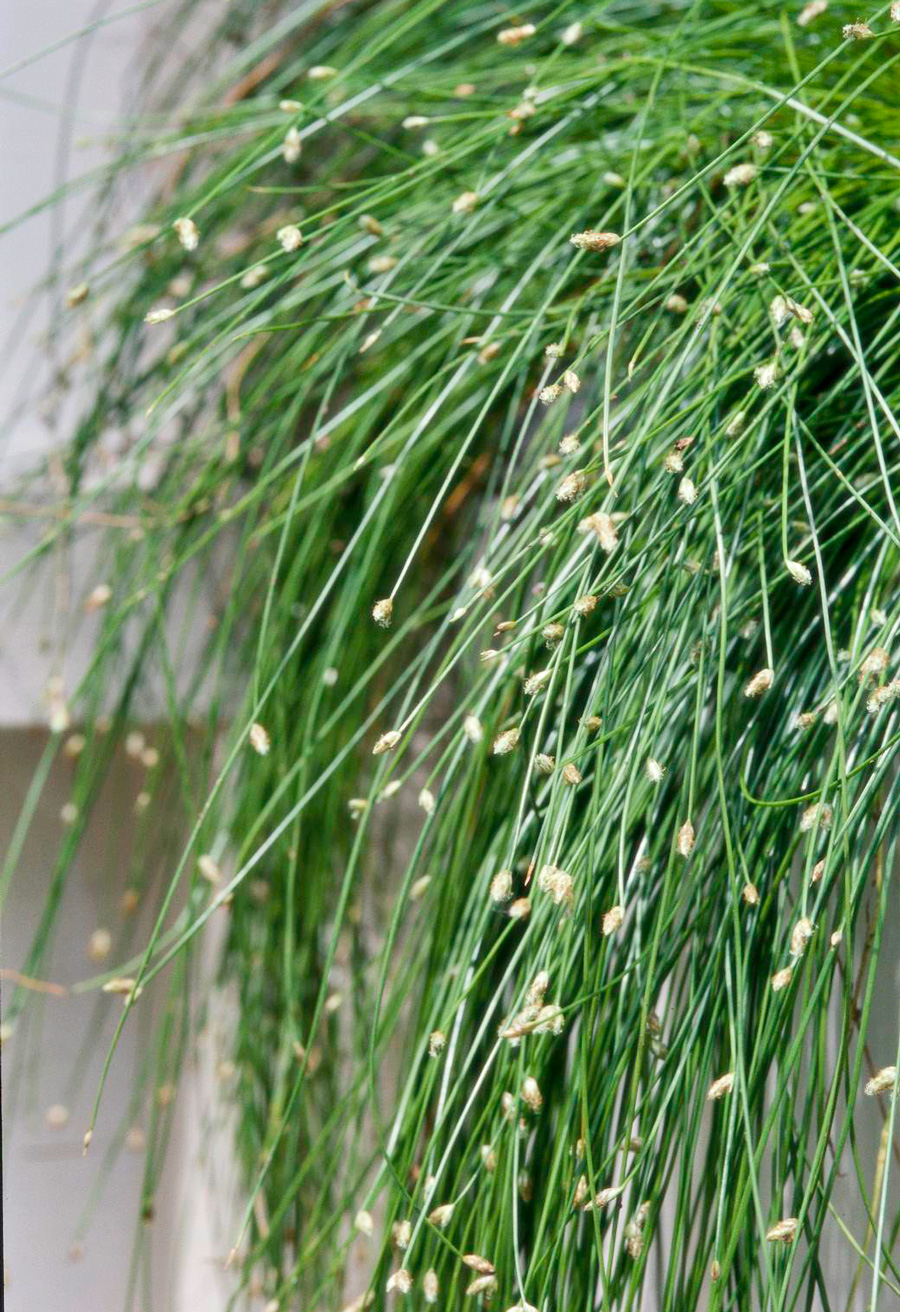 Fiber opticgrass