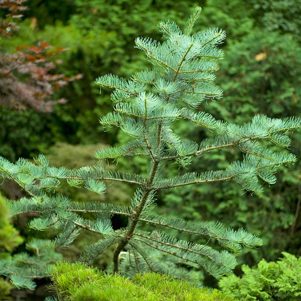 #12: Think evergreen
