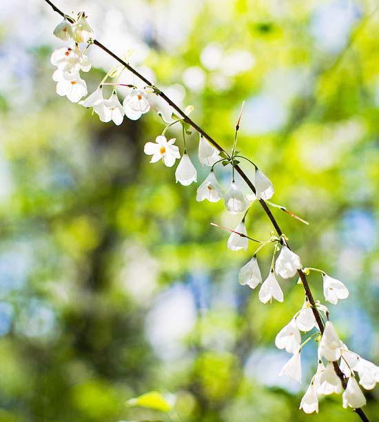 Woodland spring sampler: Silverbell