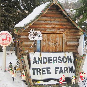 Anderson Tree Farm
