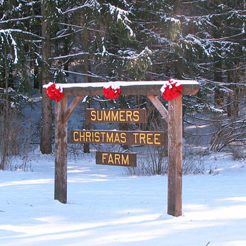 Summers Christmas Tree Farm