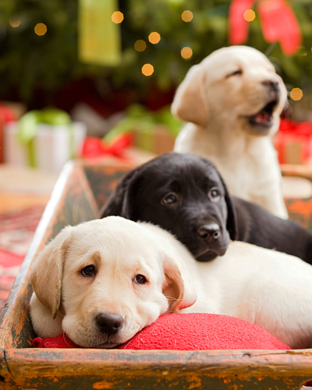 Pet-healthy holidays