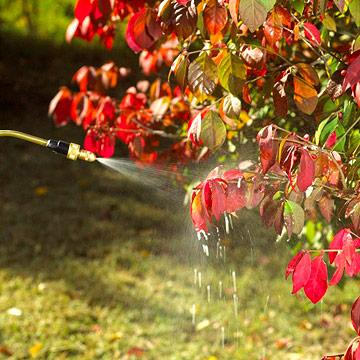 General tasks: Water, weed, rake