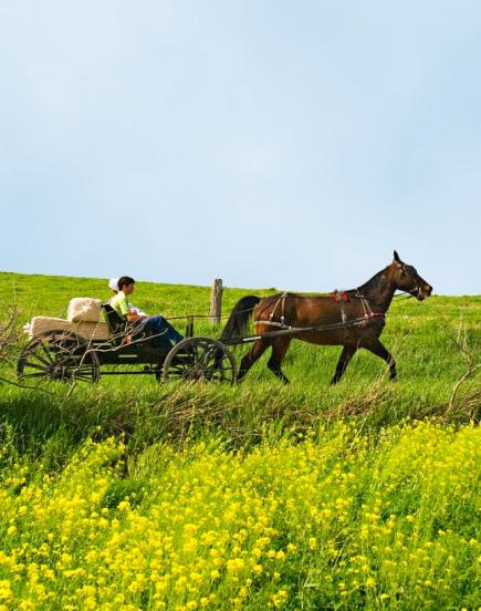 The Amish in Holmes County