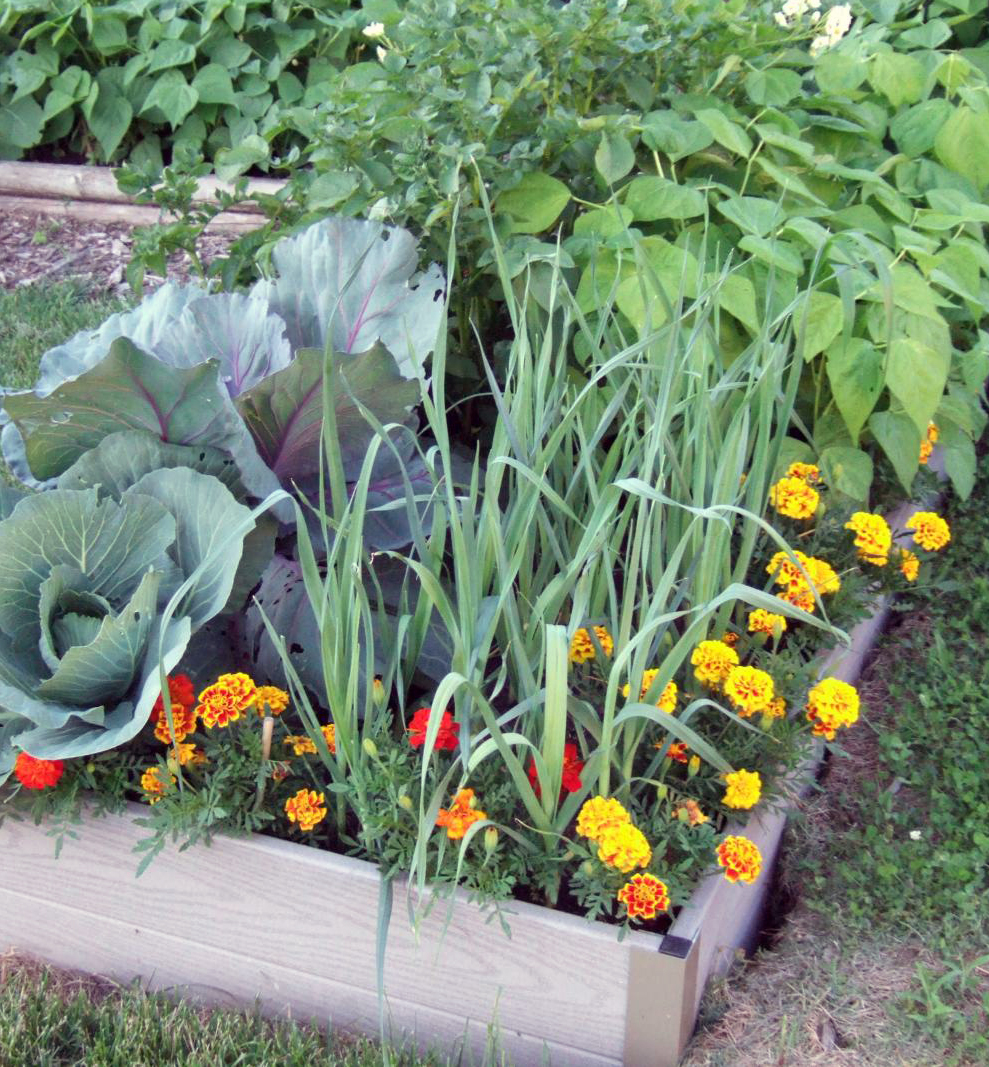 Small Space Gardening Build A Tiny Raised Bed Midwest Living