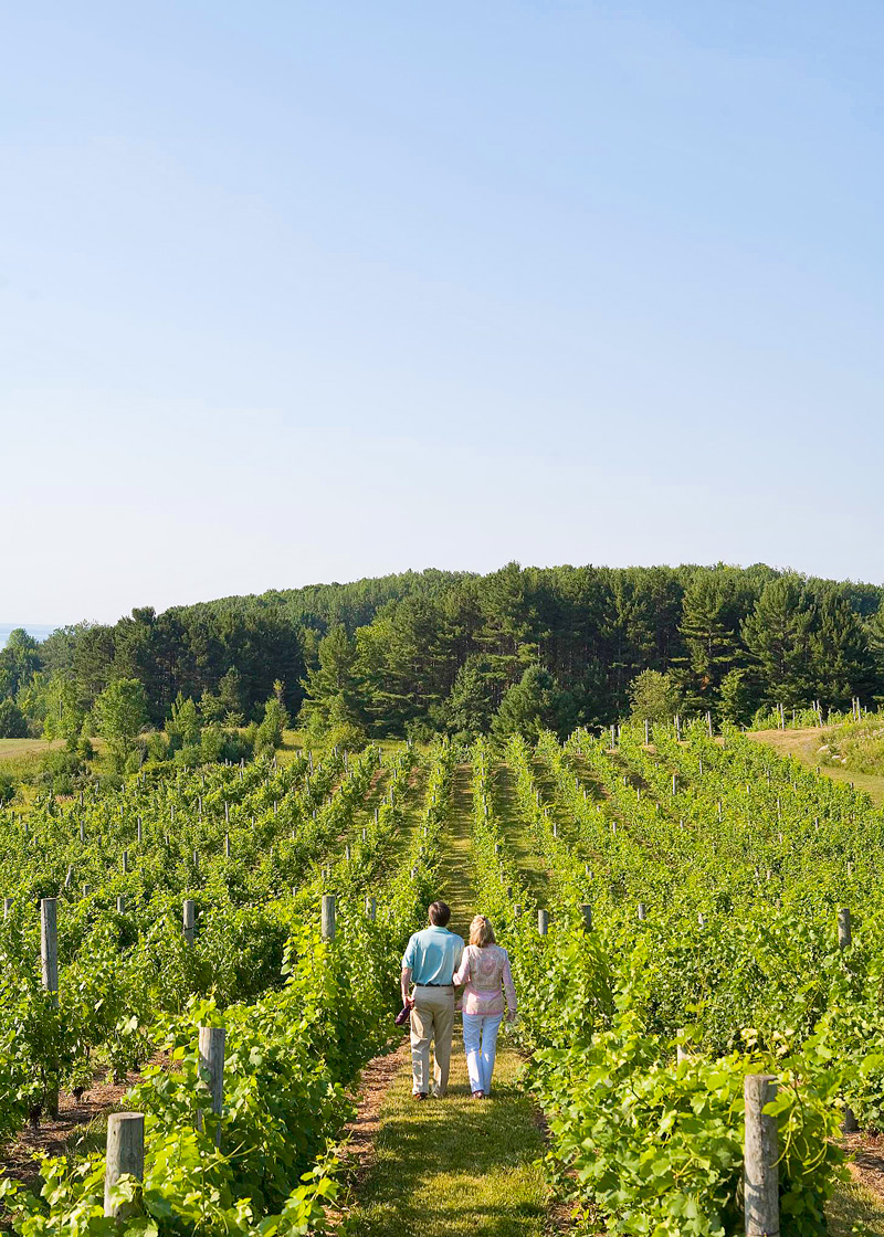 Willow Vineyards in Suttons Bay, Michigan