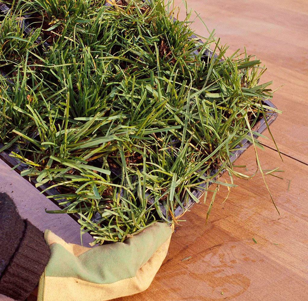 Patching with sprigs or plugs (Step 1)