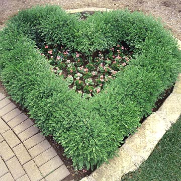 Heart of boxwoods