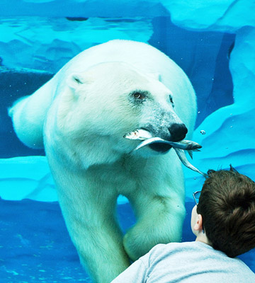 Things to Do in Detroit--Detroit Zoo