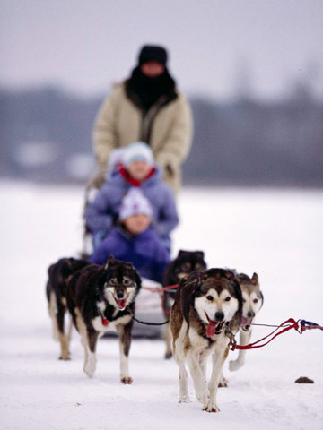 Ride a dogsled