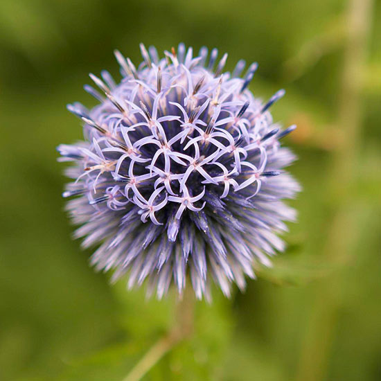 Garden tour: Up-close thistle