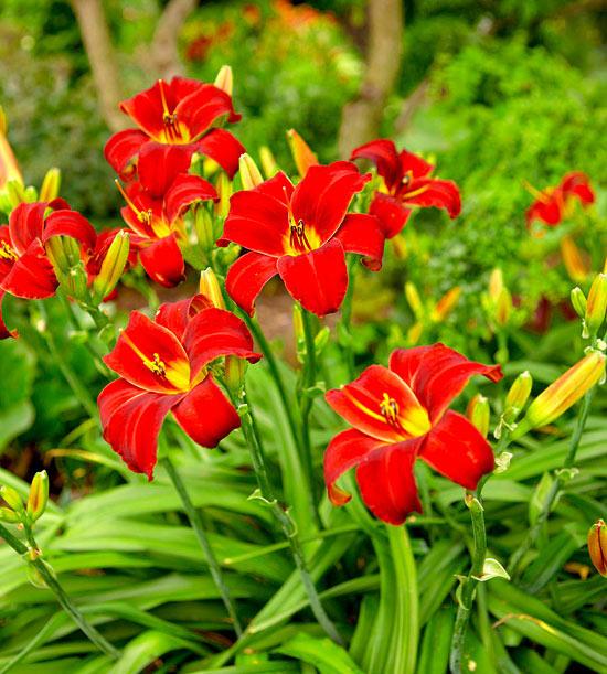 Garden tour: Bright lilies