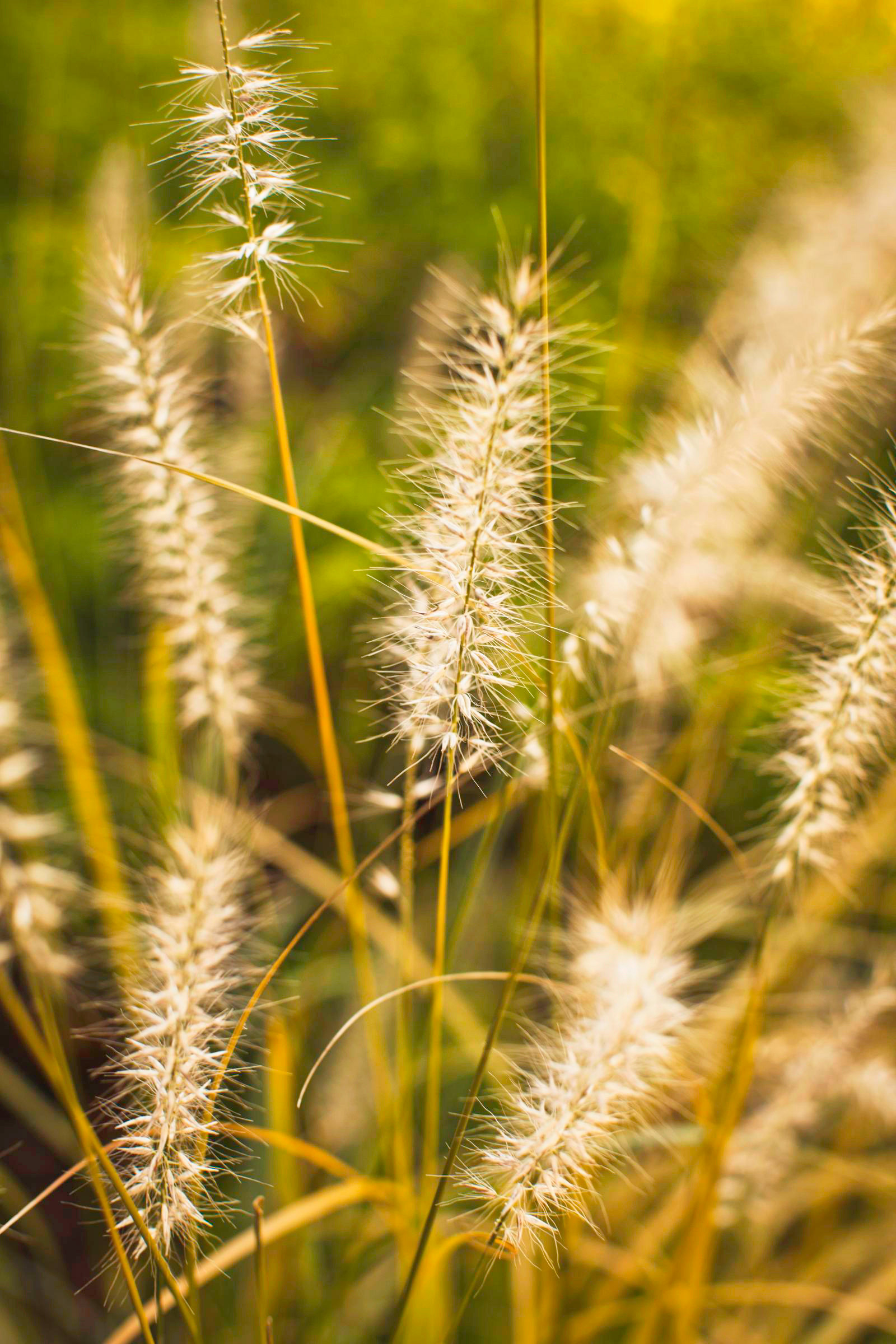 Fall garden ideas: Ornamental grasses