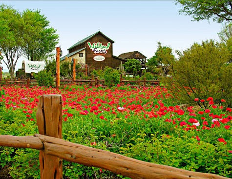 More than 200 acres of colorful wildflower fields greet visitors at Wildseed Farms. Photo Courtesy of Wildseed Farms.