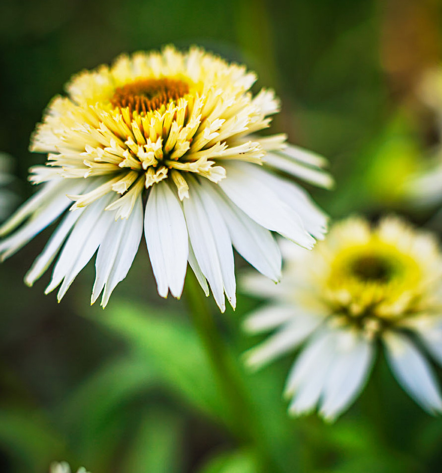 Garden lessons: Include white