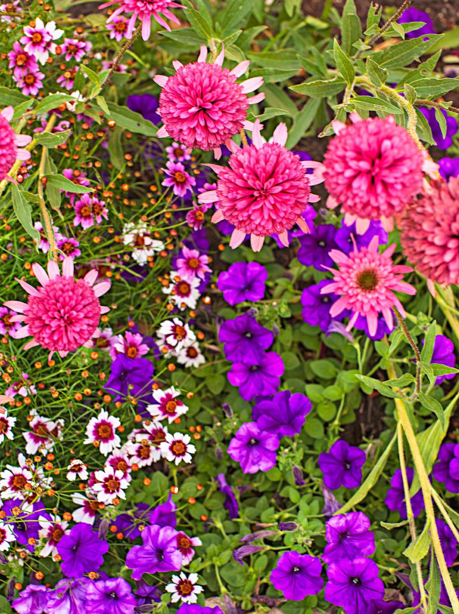 Garden lessons: Plan for year-round interest