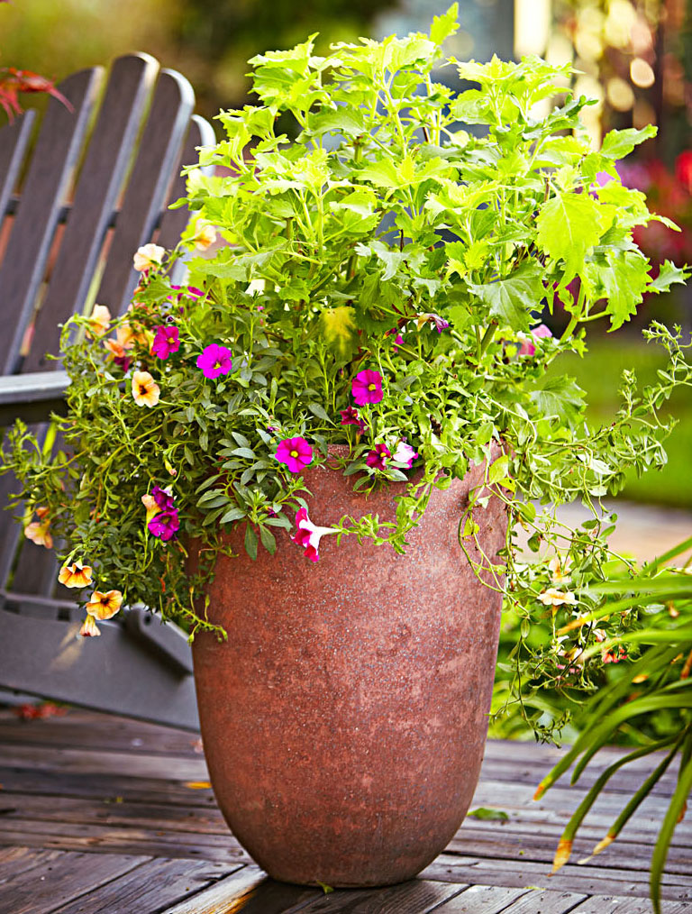 Vibrant color container garden
