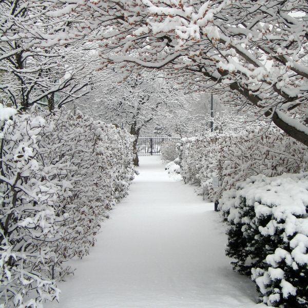Ohio gardens