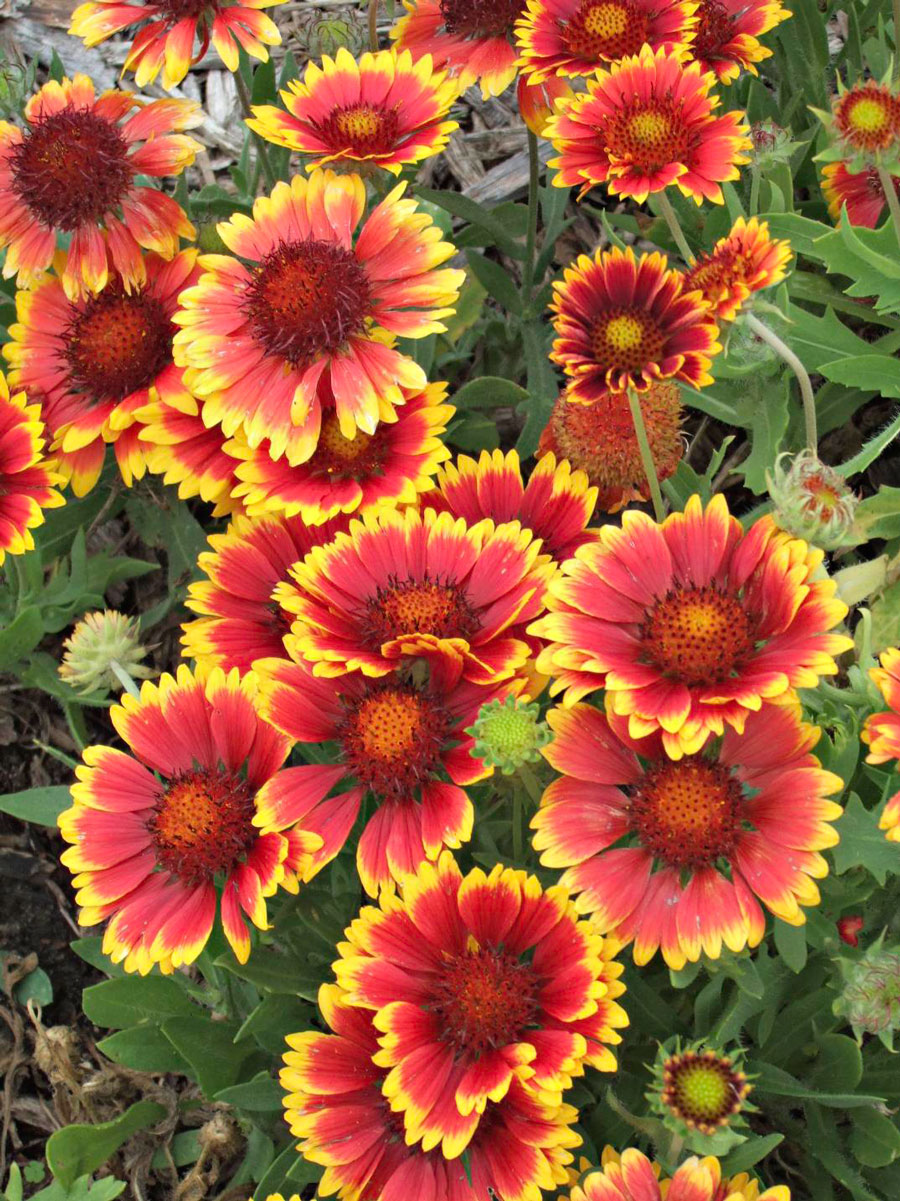 25 Top Easy-Care Plants for Midwest Gardens