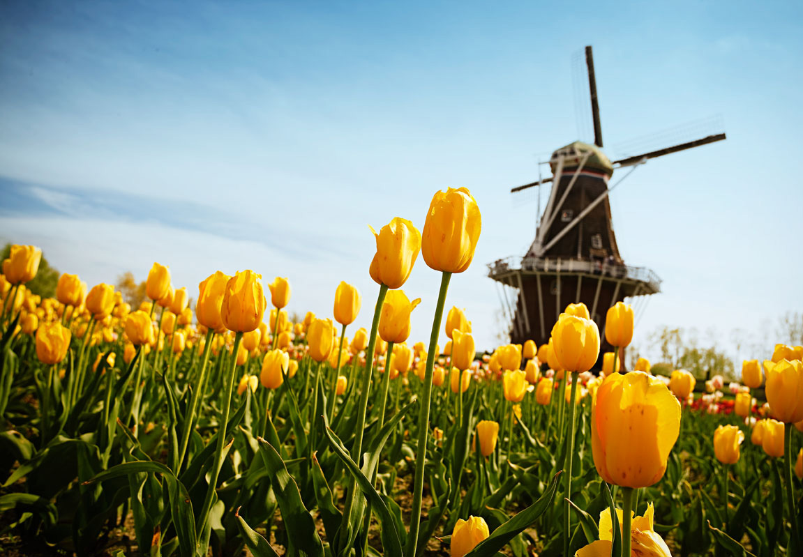 Holland Area Trip Guide
