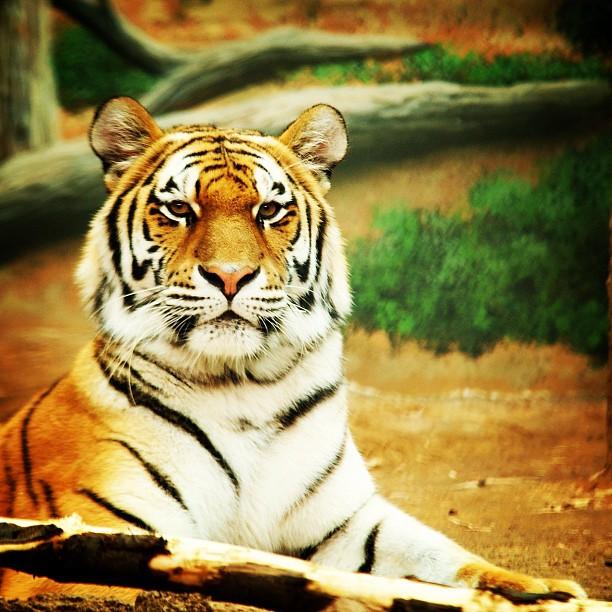 justinleephotos1_zoo.jpg
