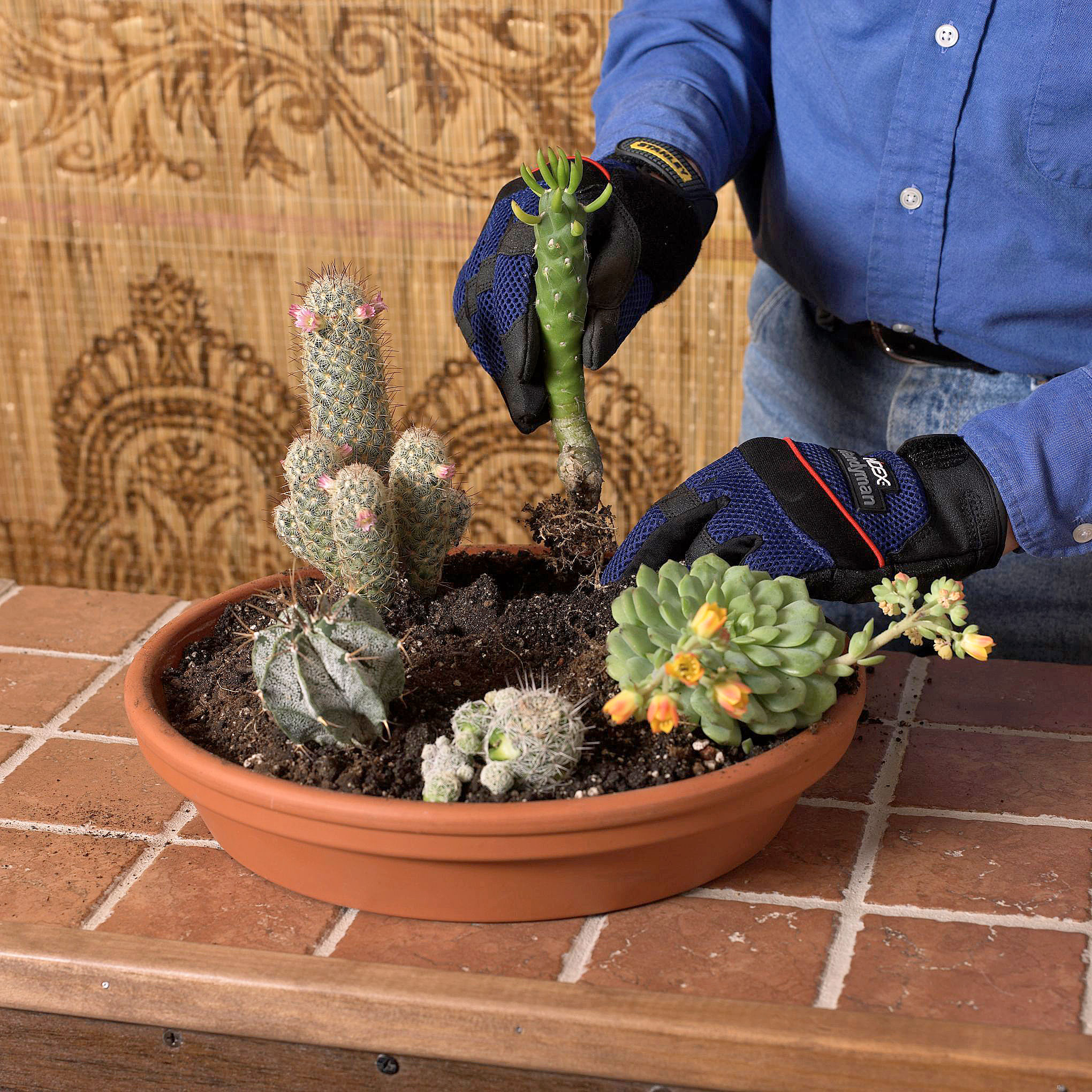 Planting the cacti