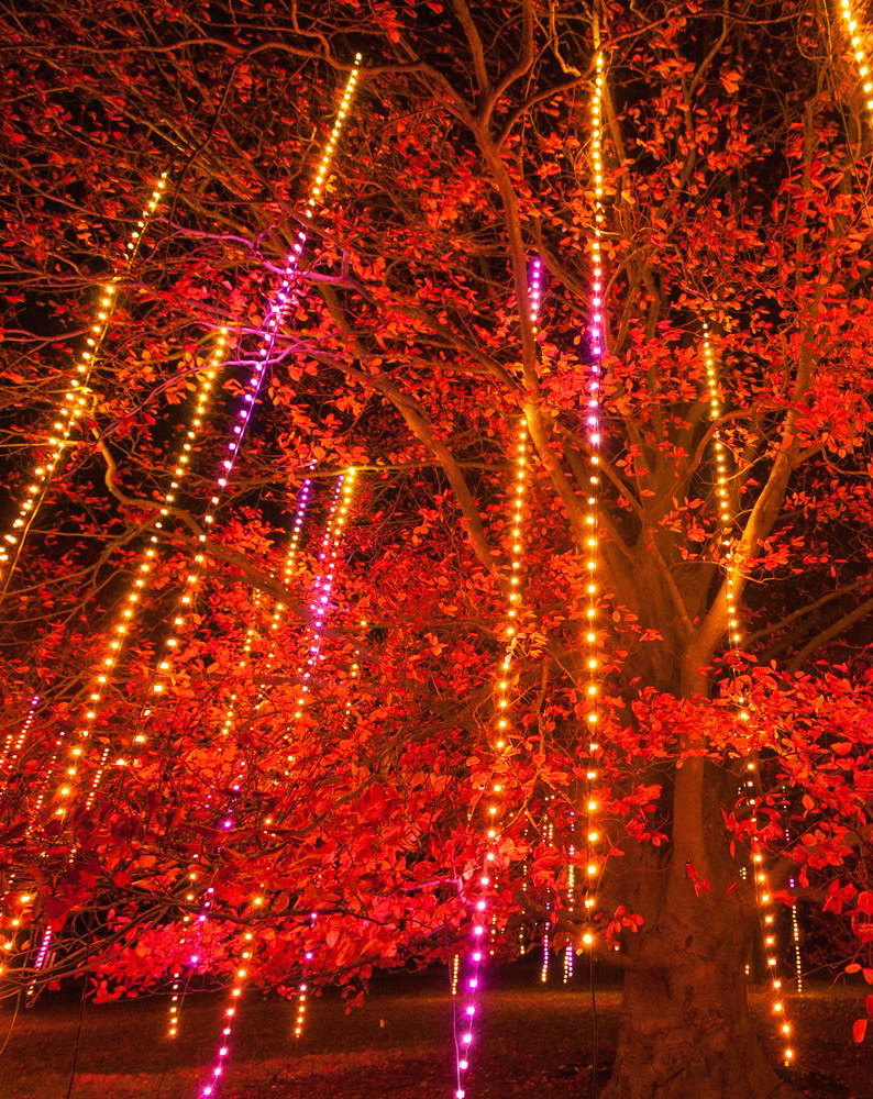 Illumination: Tree Lights at The Morton Arboretum, Lisle