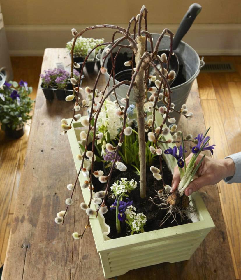 Step 4: Arrange assorted plants