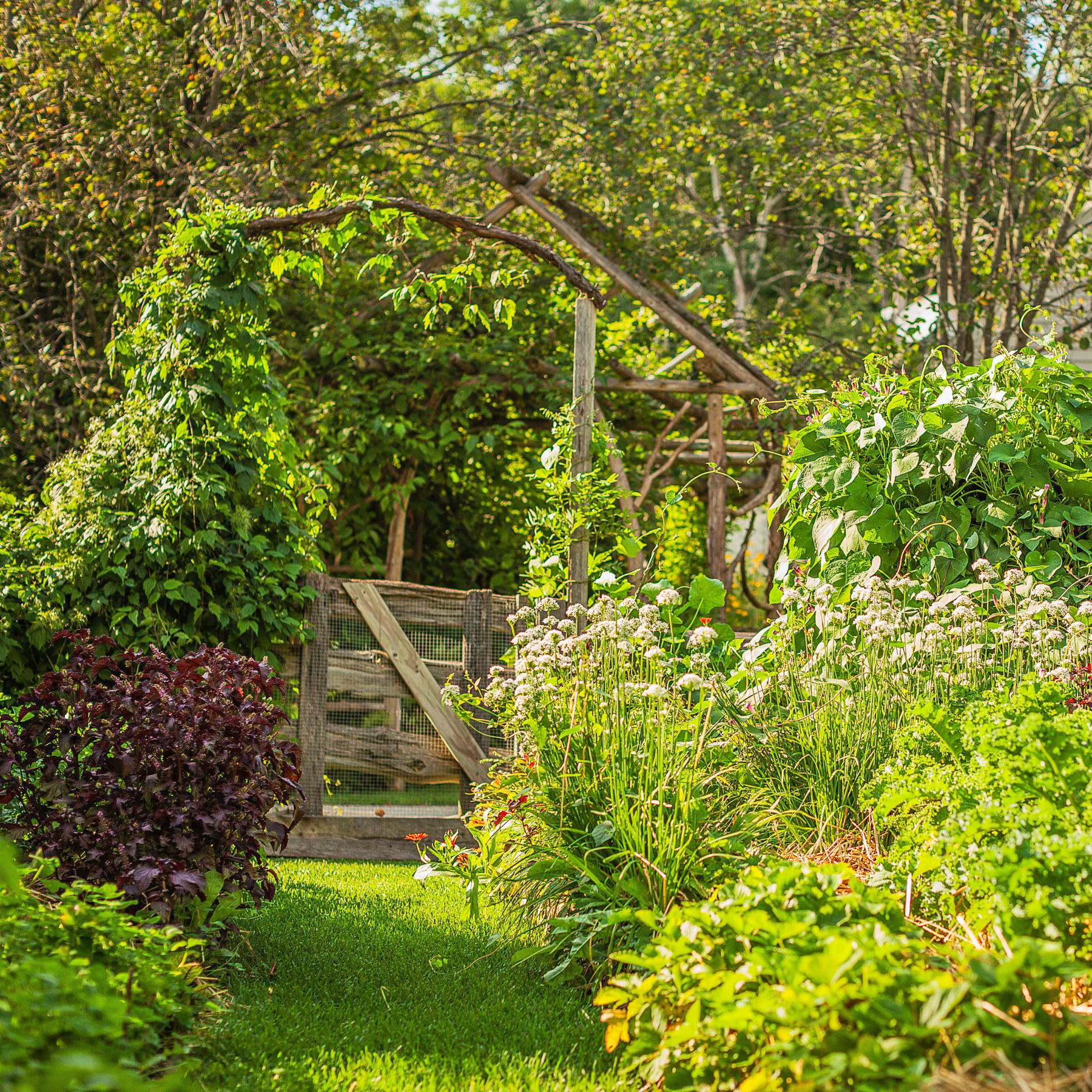 5 steps to better garden health