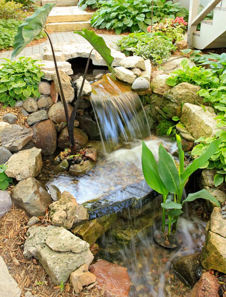 Backyard water feature
