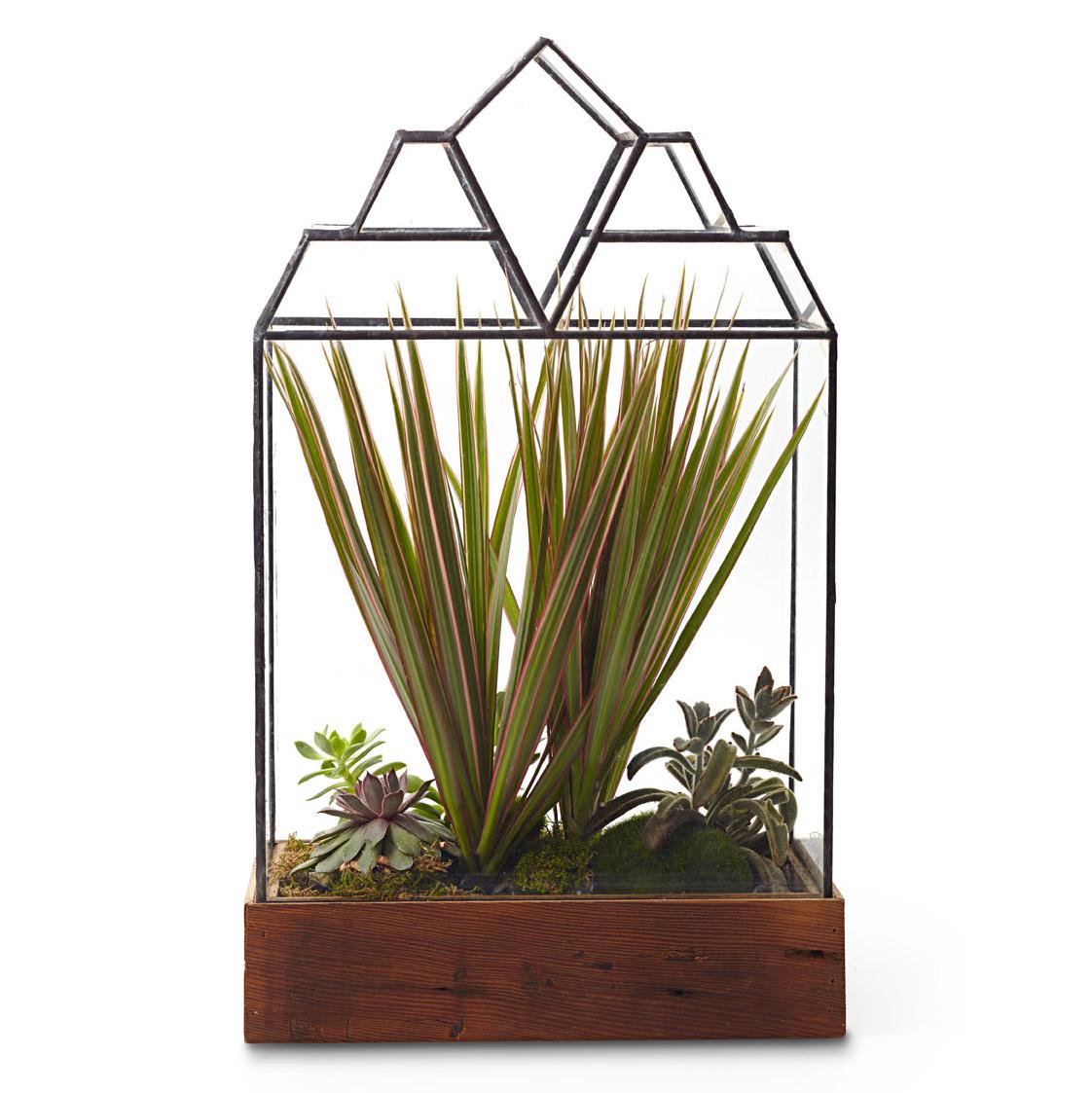 LeadHead Glass terrarium