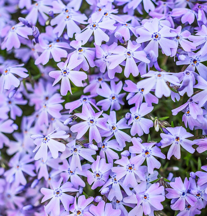 15 Easy Midwest Groundcovers